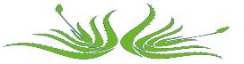 Aloes et produits de santé