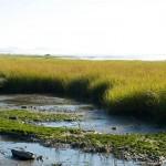 fleuve st laurent - 2011 - 2292344598341