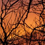 Arbre au coucher de soleil